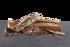 Bild på Weber® SMOKEFIRE Träpellets Äpple 9kg