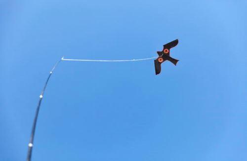 Bild på SILVERLINE Fågelskrämma Blackbird Drake